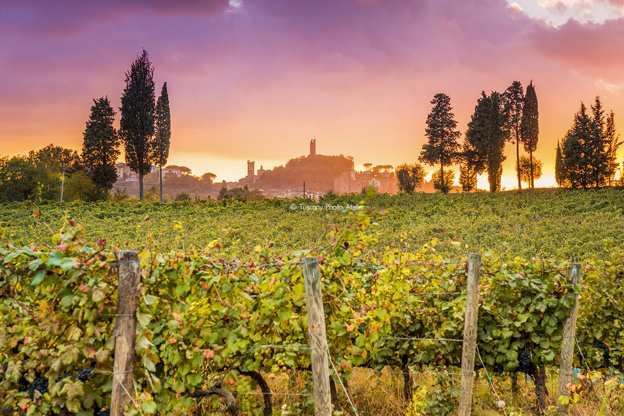 Visit to vineyards and wine tasting in San Miniato