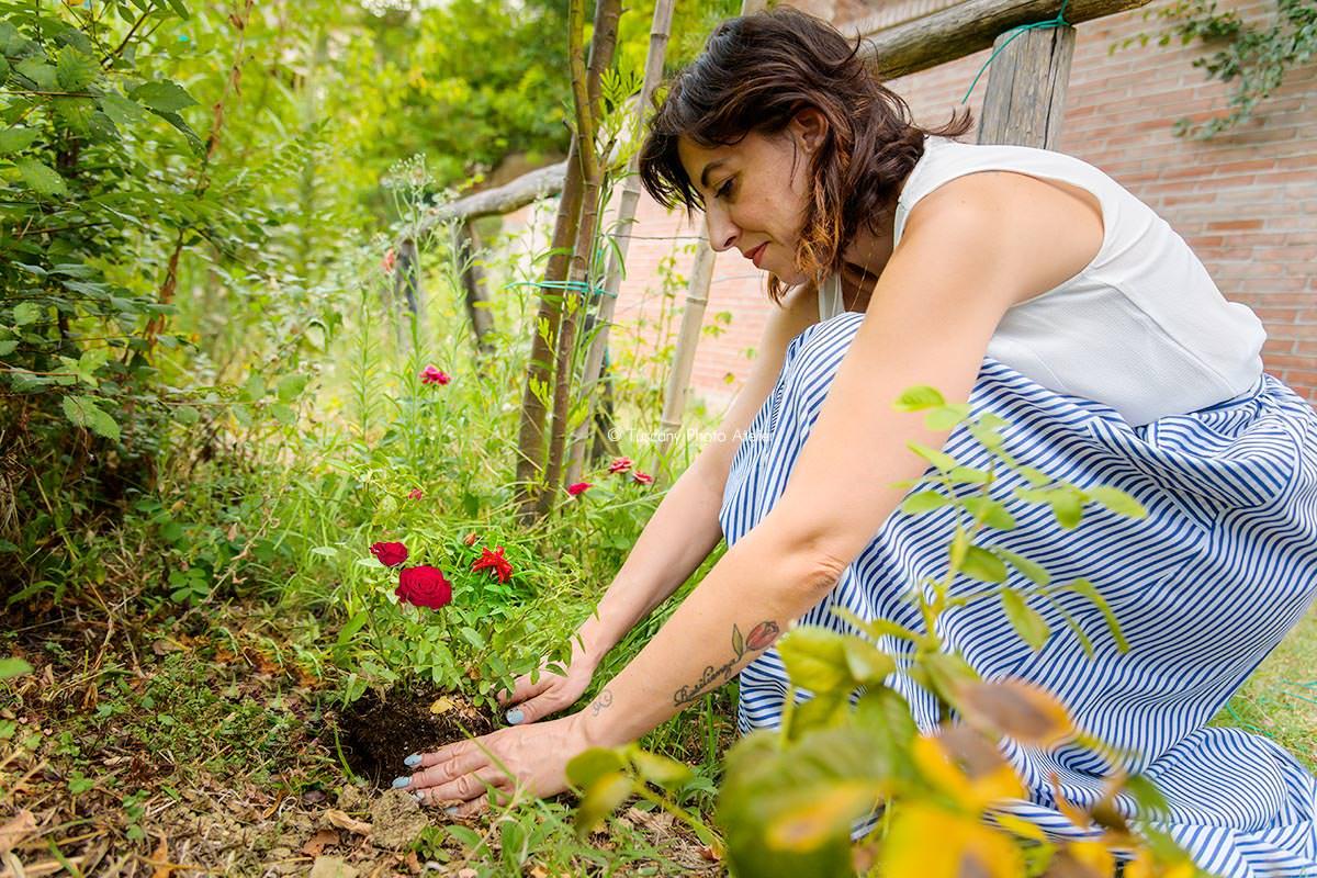 Piantumazione della rosa nei vicoli carbonai a San Miniato in Toscana