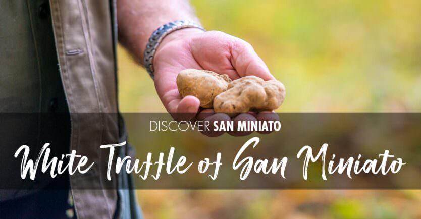 White Truffle of San Miniato